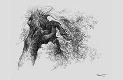 Albero di roccolo 2004 I. Disegno a matita 24x32,07