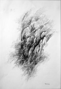 Alberi di roccolo II 2019. Disegno a matita su carta 48x33