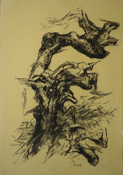 Alberi di roccolo 1, 1992. Carbone Conté su carta giallina 49,7x34,6