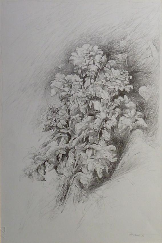 Rose 1984, disegno a matita 44,5x30