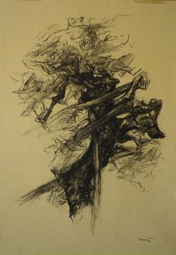 Albero di roccolo 2, 1992. Carbone Conté su carta giallina 49,7x34,6