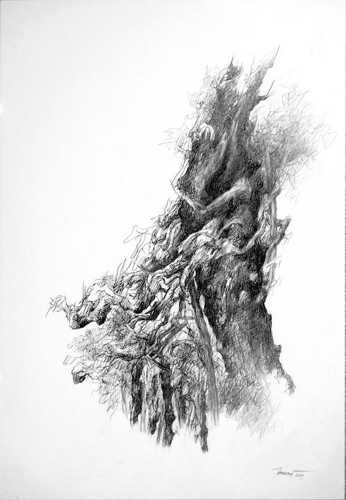 Alberi di roccolo II, 2009. Disegno a matita su carta 48x33.jpg