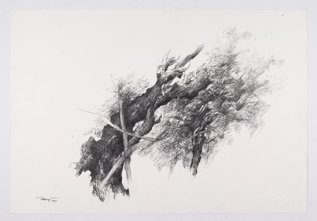 Alberi di roccolo III2009, disegno a matita 35x50