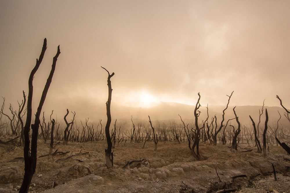 Dead trees in a wasteland.