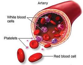platelets.jpg