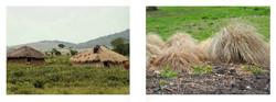 Huts/ Grass