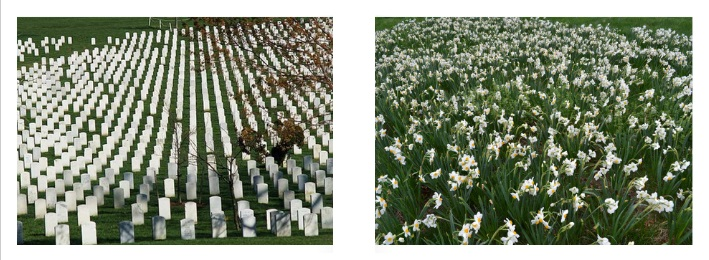 Arlington Cemetery/ Field of Flowers