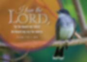 bird_20246ac (1).jpg