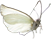 CW-butterfly1©.png