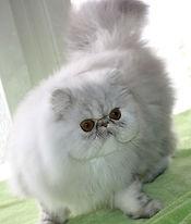 Pele Mele Cats