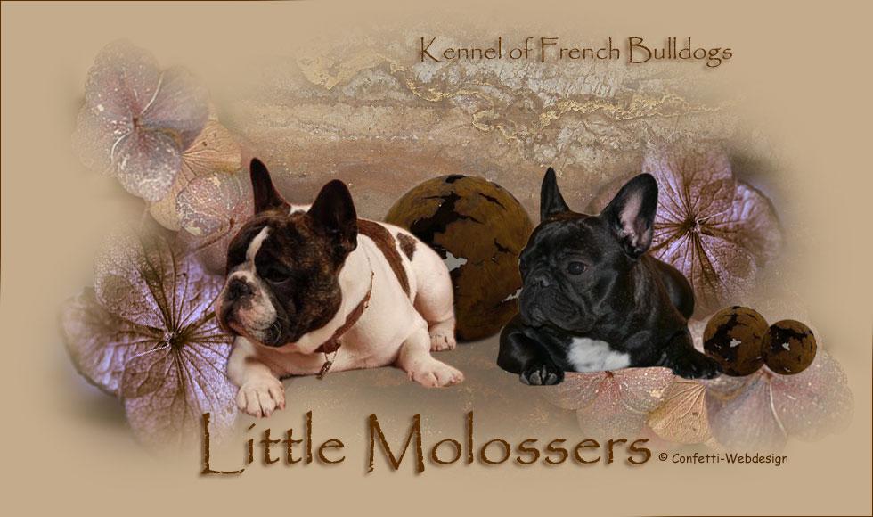 Little Molossers