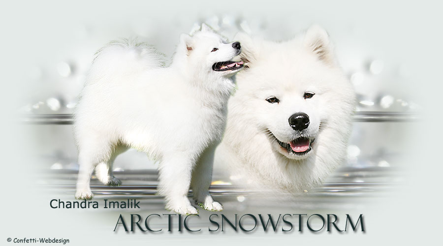 Artic Snowstrom