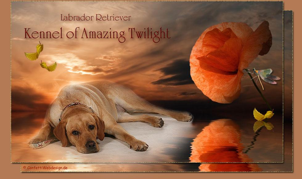 Amanzing Twilight