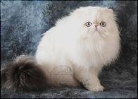 Pele-Mele-Cats