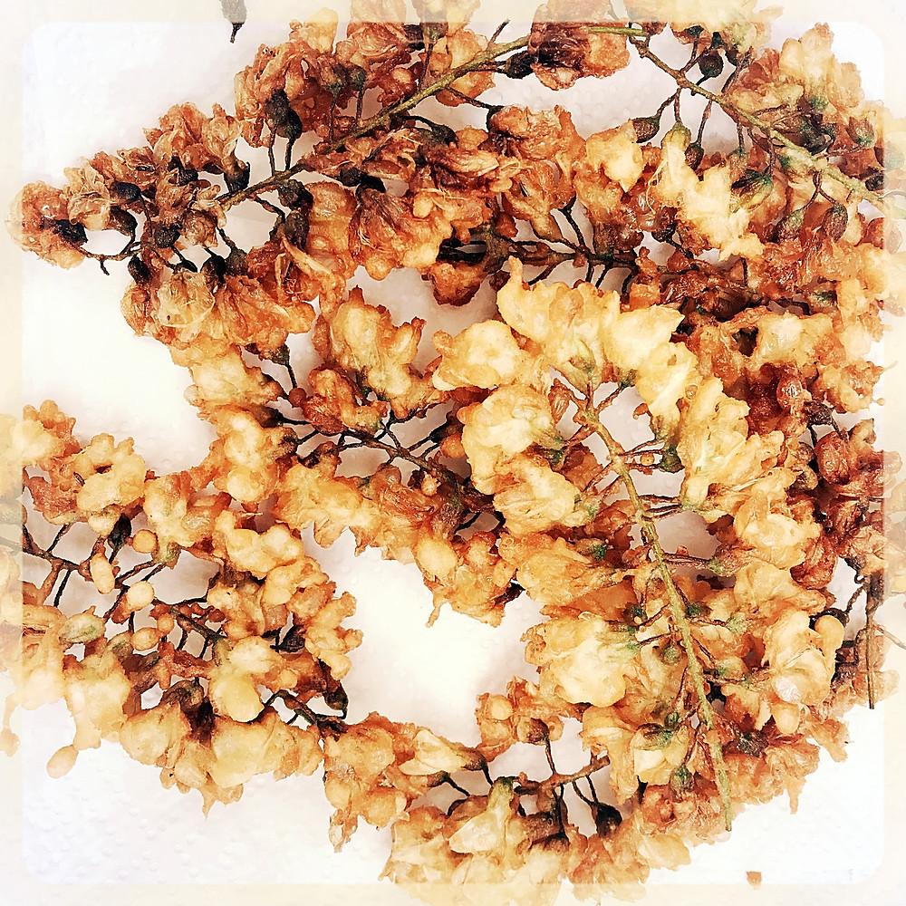 Beignets de fleurs d'acacia ©Clémentine Chauveau