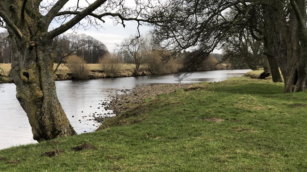 Local river walk - dog friendly.