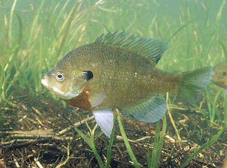 fish 1 .jpg