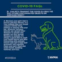 COVID-19-pets transmit080x1080.png