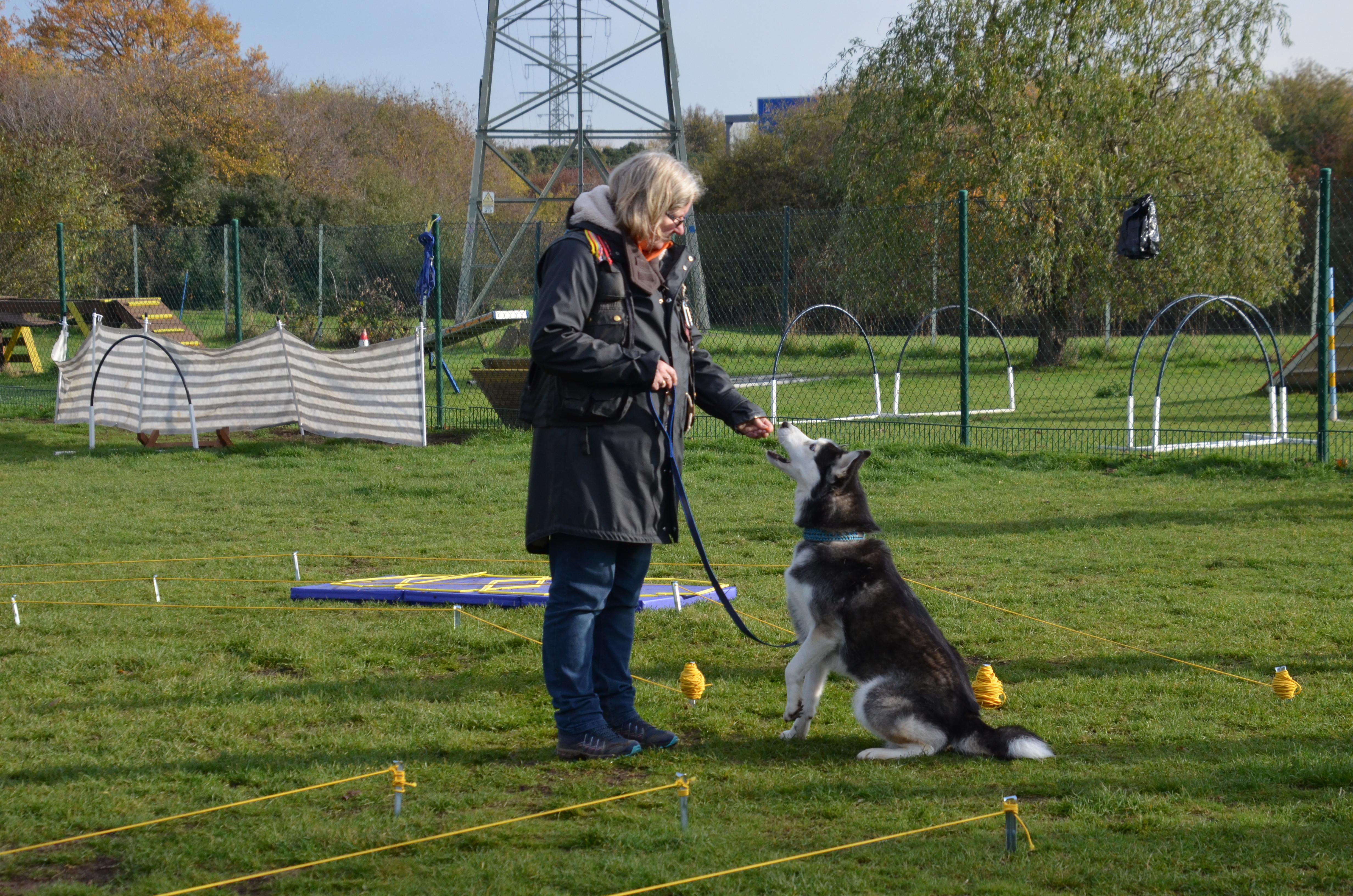 Einzeltraining Hundeplatz