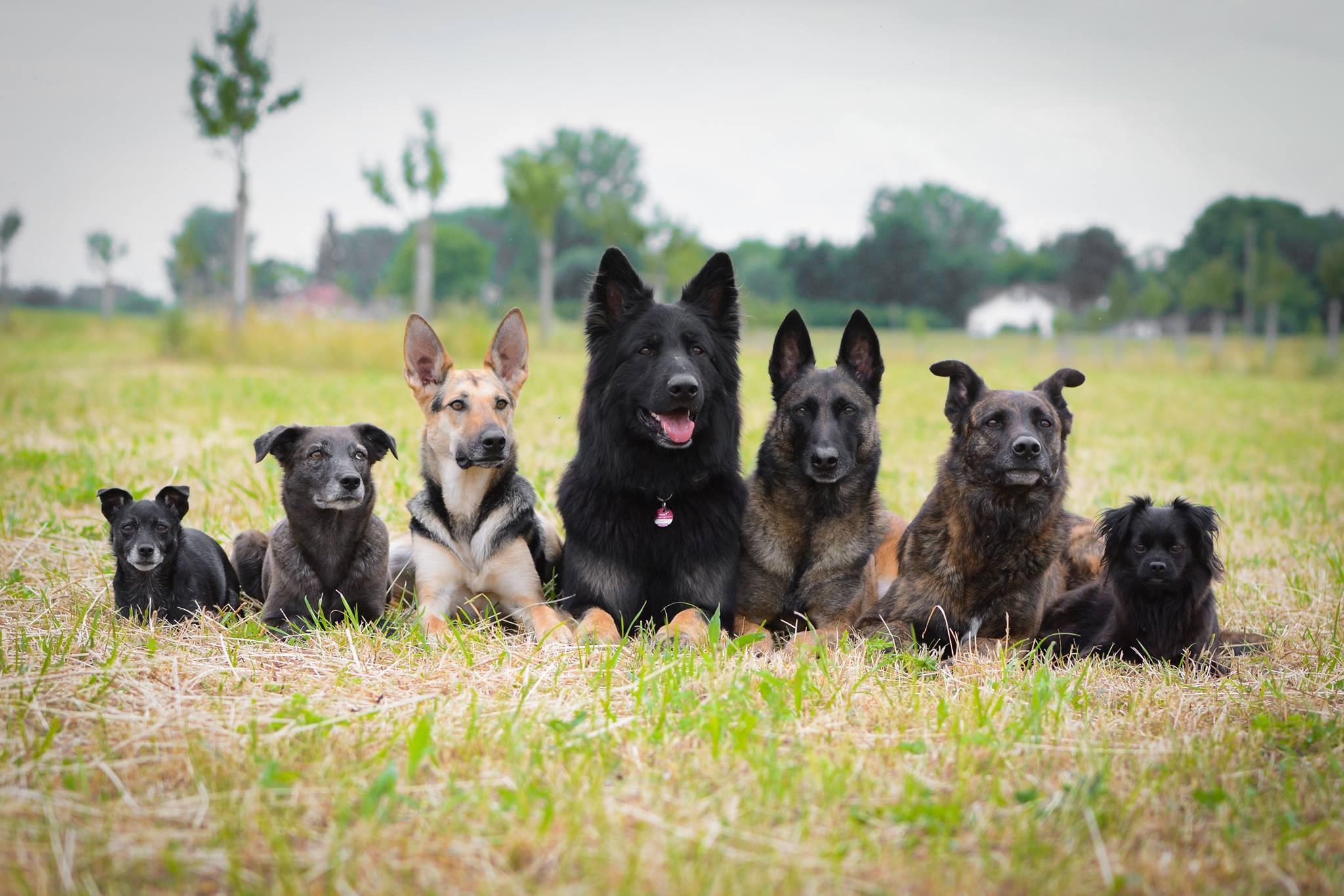 Hundefreilauf Samstag