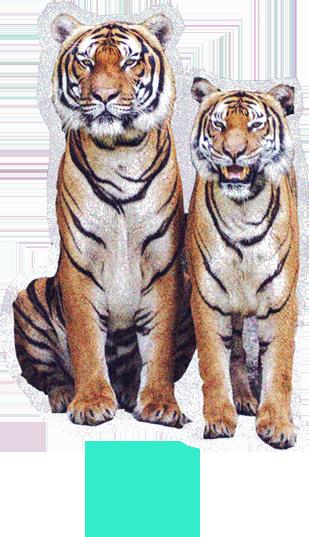 tigres.png