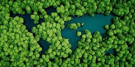 Trees_edited_edited.jpg