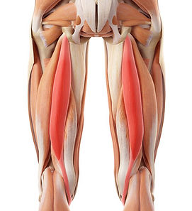 hamstring_injury_1.jpg