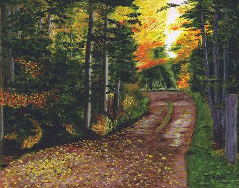 Fall Lane (original oil painting 11x14)