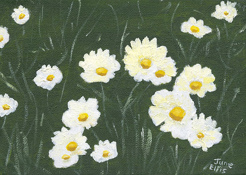 Daisies 2 (original oil 5x7)