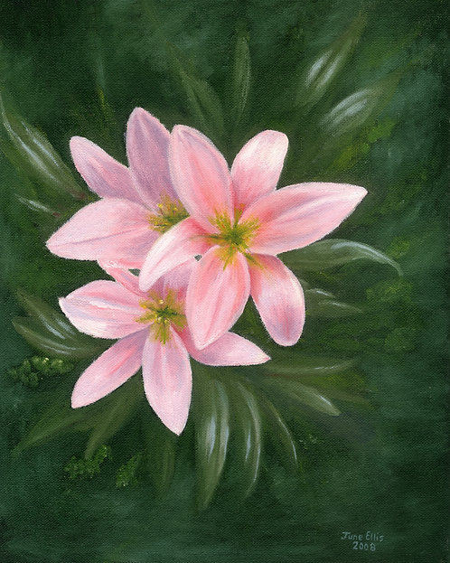 Pink Lilly's (original oil painting 14x11)