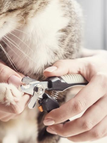 Désensibilisation de votre animal pour les soins