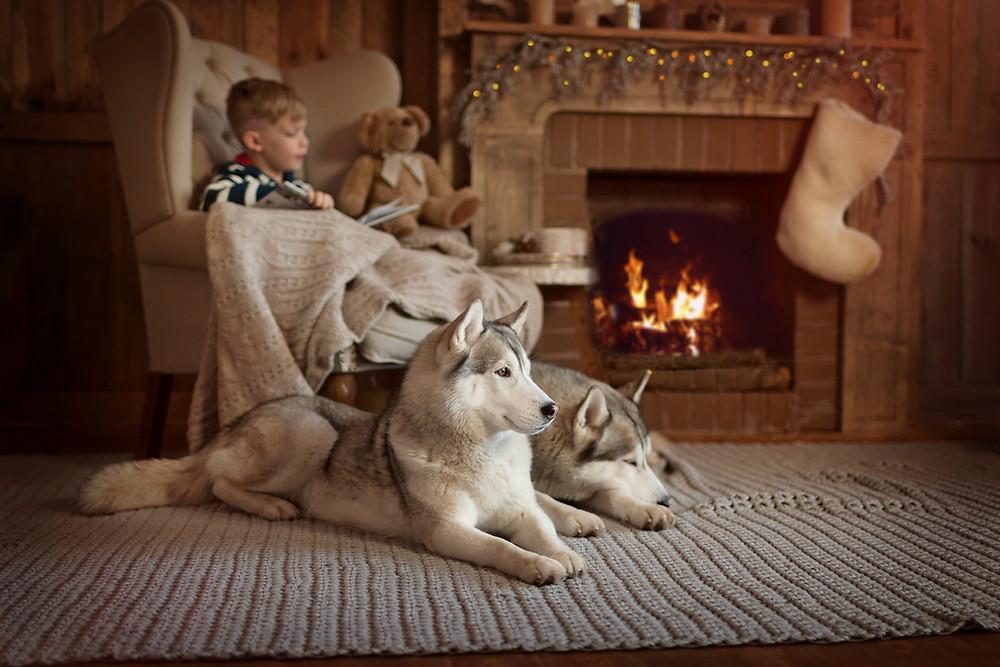 Supervision enfants et chiens
