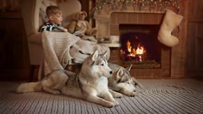 Évitez la déprime de Noël chez vos animaux