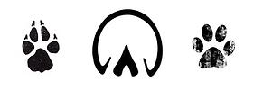 Paw Prints Logo BCCAB.png
