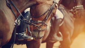 """Muserolles: """"Cavaliers, il faut qu'on parle"""" (XVe congrès de l'ISES, suite)"""