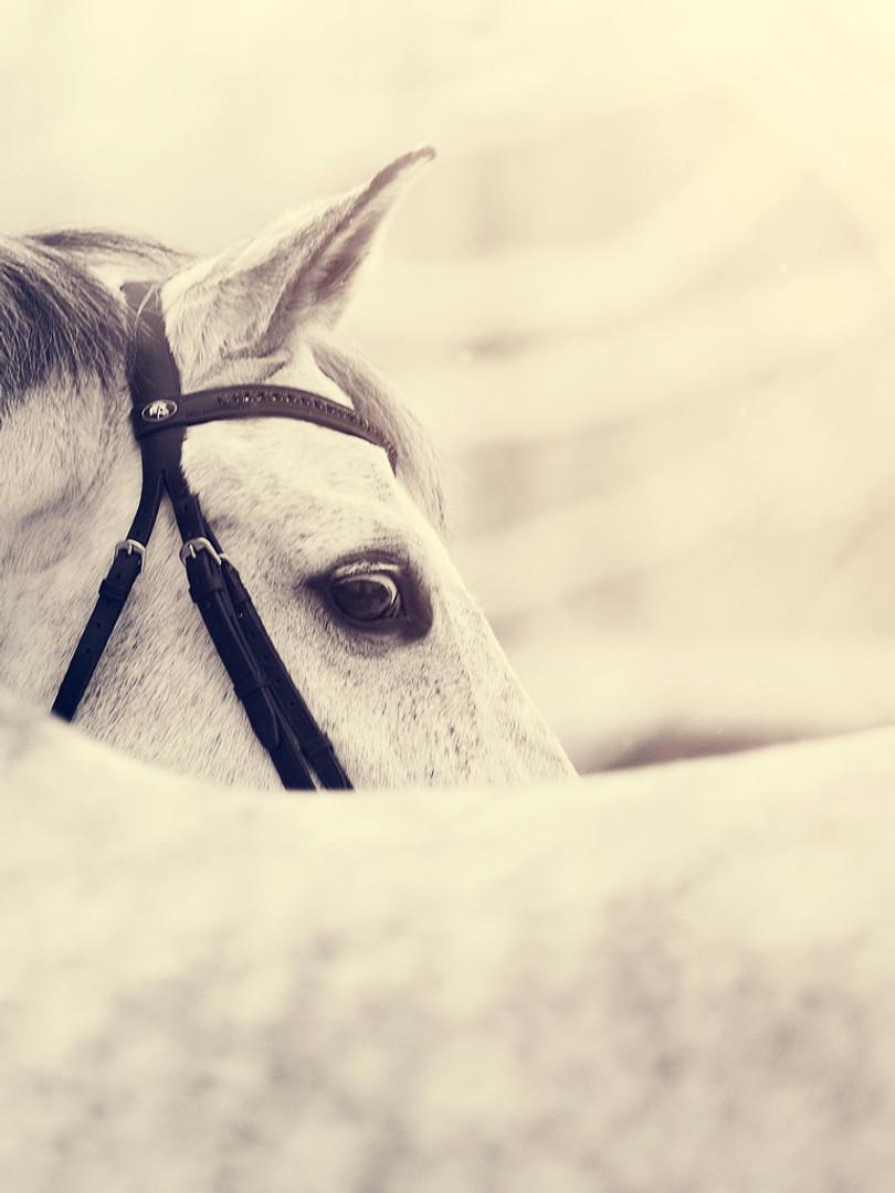 Intervention comportementale chevaux