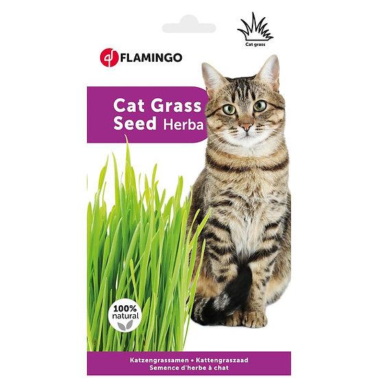 Cat Grass Kit