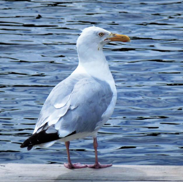Sea Gull photo by Janet Kay http://www.novelsbyjanetkay.com