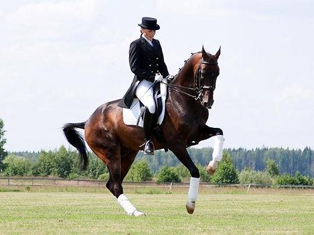 dressage-horse-and-rider.jpg