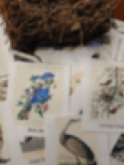 audubon pocket cards .jpg