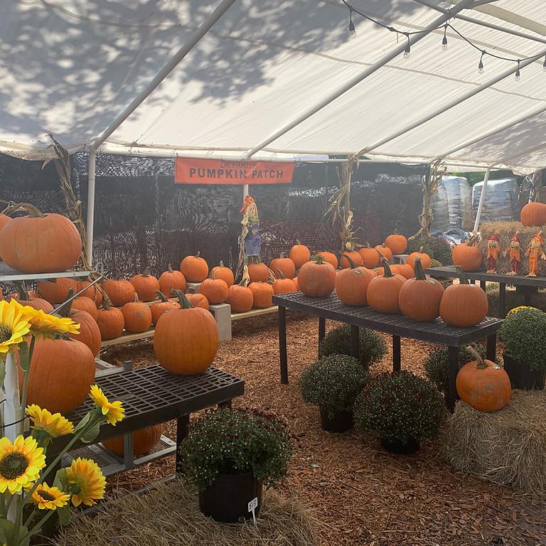 DK Farm Festival LAST DAY (Oct. 30)