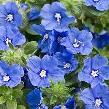 Blue Daze 'Blue My Mind'