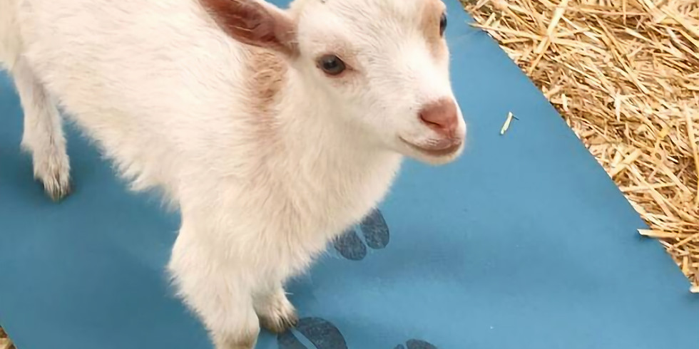 Goat Yoga Nov. 28th