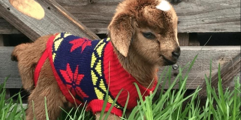 Goat Yoga Nov. 7th