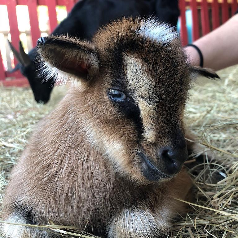 Goat Yoga June 26th