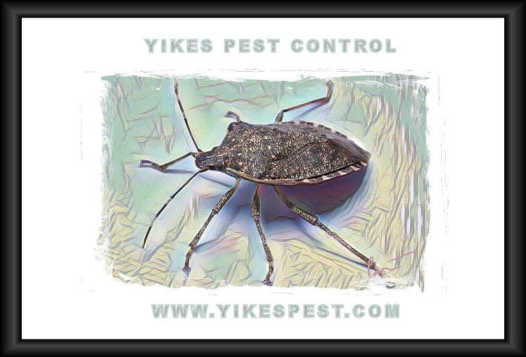 Haubstadt Indiana Pest Control