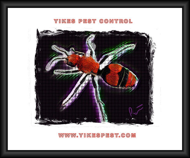 Velvet Ant, Posey County, Indiana  Top Pest Control Near me