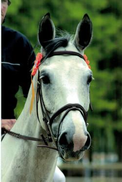 Remise des prix de concours d'équitation