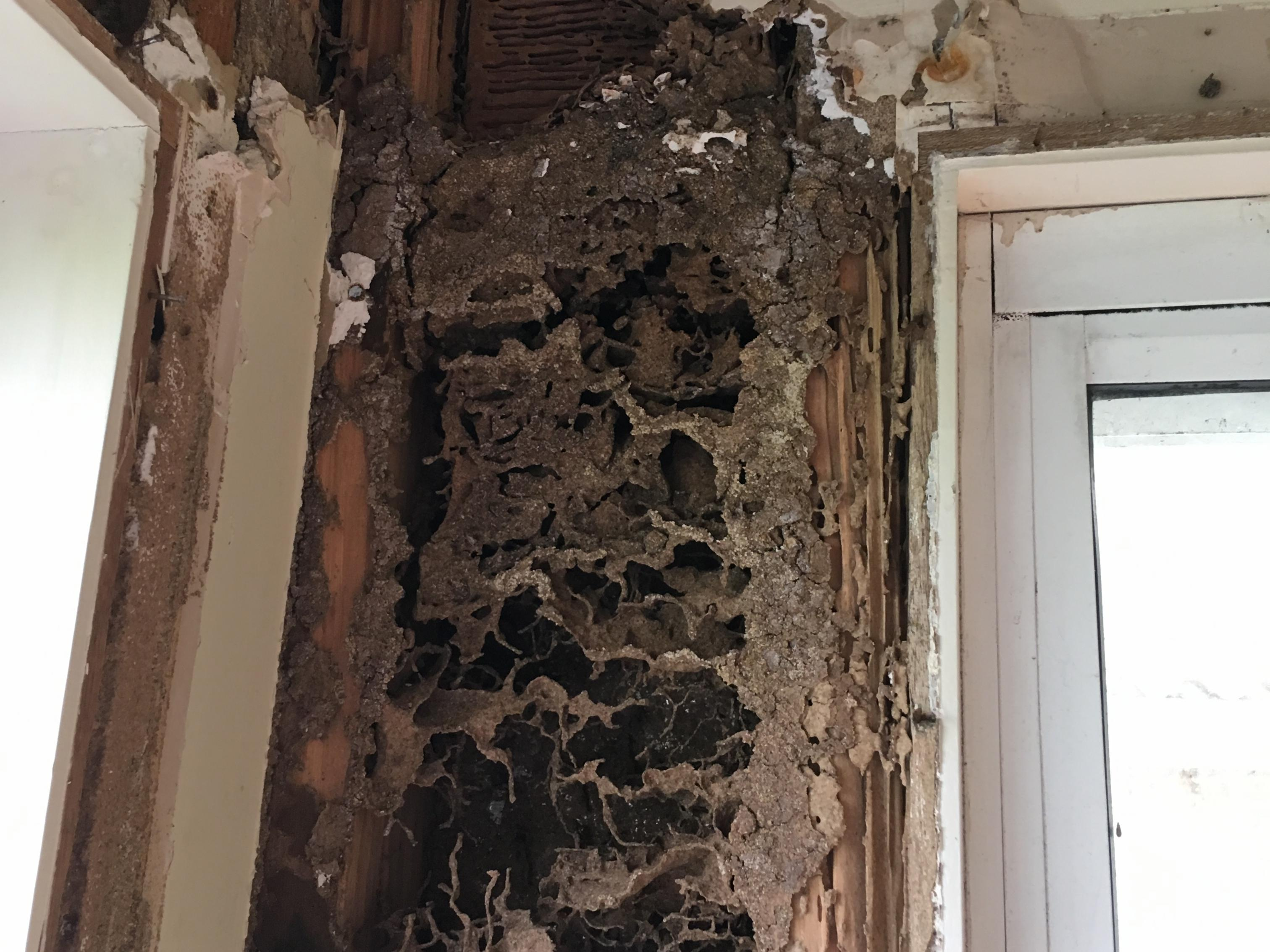 Termite damage repair Sydney