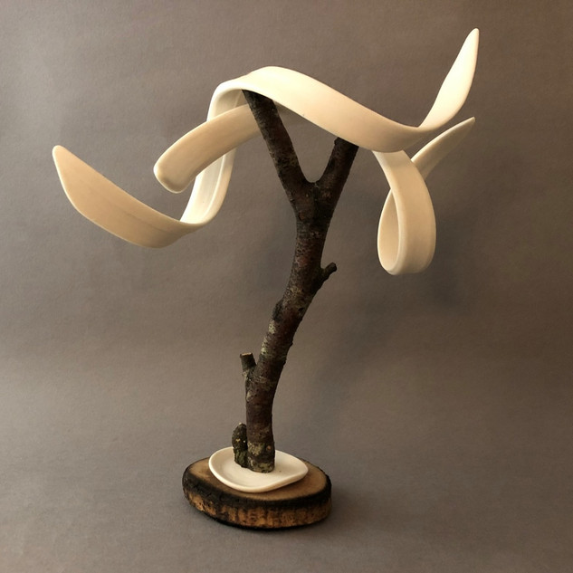 Rooted#3 - Porcelain Wood - H22cm W20cm